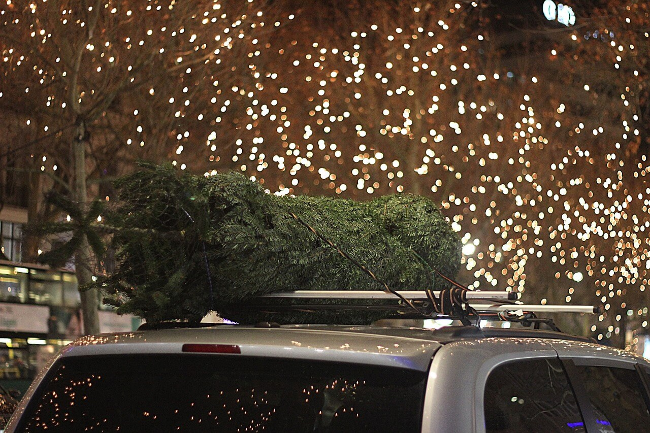 Christmas tree on top of car
